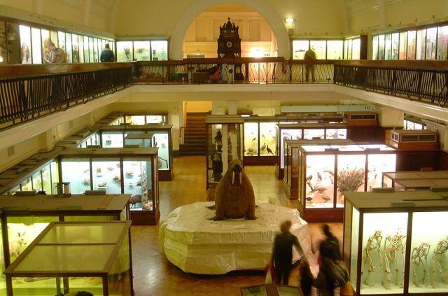800px-Horniman_Museum_interior